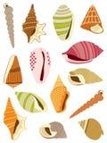 Sea snails shells Stock Photos