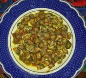 Sea snails Royalty Free Stock Photos
