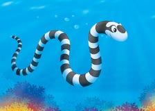 Sea snake Royalty Free Stock Photos
