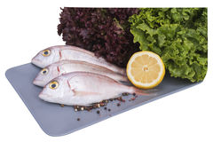 Sea snapper Stock Photography