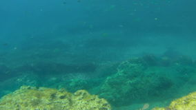 Sea snorkeling point of view with fishes in the sea. stock footage