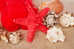 Sea spa setting with  red star fish Royalty Free Stock Images