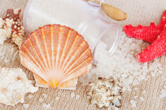 Sea spa setting with  scallops comb shell Royalty Free Stock Photos
