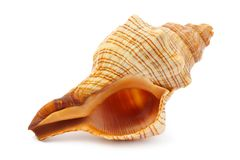 Sea spiral shell Stock Photos