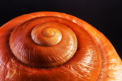 Sea spiral snail shell Royalty Free Stock Images