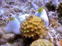 Sea Sponge. A unique shape of a sponge species Royalty Free Stock Image