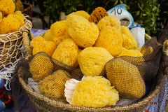 Sea sponge Royalty Free Stock Photography