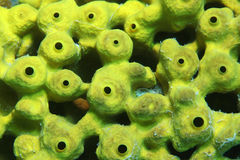 Sea sponge Stock Photos