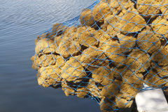 Sea Sponge Catch Royalty Free Stock Photography