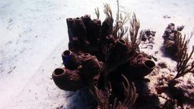 Sea sponge. Close-up stock footage
