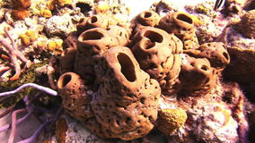 Sea sponge. Close-up