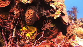 Sea sponge. Close-up stock video