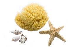 Sea sponge and starfish Stock Image