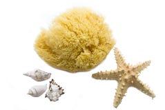 Sea sponge and starfish. On white background Stock Image