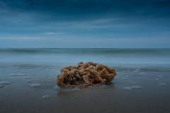 Sea Sponge Washed Up on Beach Stock Photo