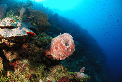 Sea sponges and corals Stock Photography