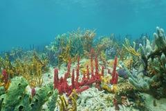 Sea sponges diversity underwater Caribbean sea Stock Images