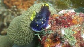 Sea sponges underwater in ocean of wildlife Philippines. Travel in world of unique colorful beautiful ecosystem nature coral, algae, fish. Diving stock video