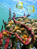 Sea sponges and  water surface Royalty Free Stock Image