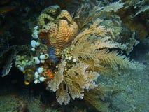 Sea squirt Stock Photos