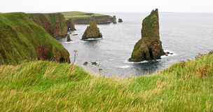 Sea stacks and cliffs. Viewpoint on duncansby head scotland towards several sea stacks Royalty Free Stock Photography