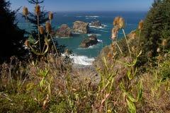 Sea stacks, Oregon coast vegetation Royalty Free Stock Photo
