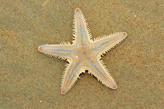 Sea-star Stock Photo
