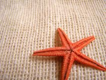 Sea-star royalty free stock photos