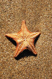 Sea star Stock Image