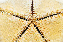 Sea star Royalty Free Stock Photo