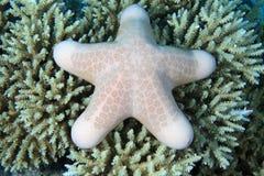 Sea star Royalty Free Stock Photography