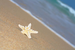 Sea star Stock Photos