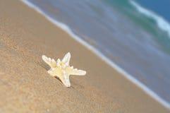 Free Sea Star Stock Photos - 2814023