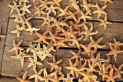Sea star Royalty Free Stock Images