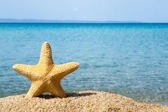 Sea star. On the beach against blue sea Stock Photo