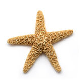 Sea Star. Starfish isolated on white background stock photo