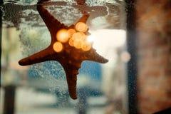 Sea star in the aquarium Stock Photo