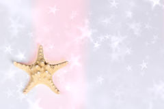 Sea star background Royalty Free Stock Photography