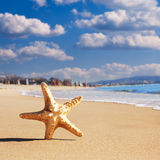 Sea star on the beach Royalty Free Stock Photos