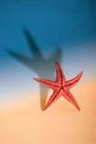 Sea star on beach Royalty Free Stock Photography