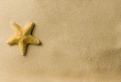 Sea star on the beach. A sea star on the beach Stock Image