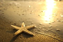 Sea star at the beach at sunset Royalty Free Stock Photography