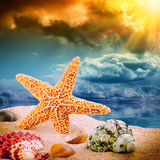 Sea star and colorful shells Royalty Free Stock Photo
