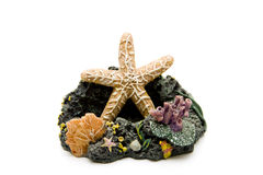 Sea star and coral Stock Image