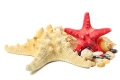 Sea star. Decorative red sea star with different shells on white background Royalty Free Stock Image