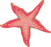 Sea star fish Stock Image