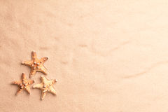 Sea star fish on beach sand texture Stock Photos
