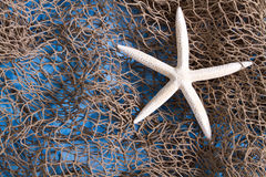 Sea star on fishing net Stock Image