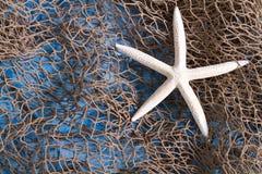 Sea star on fishing net stock image