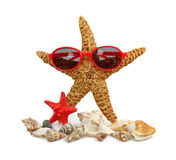 Sea star with glasses Royalty Free Stock Photography